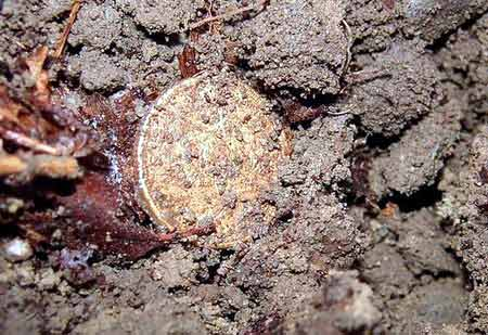 US Gold Coin Found