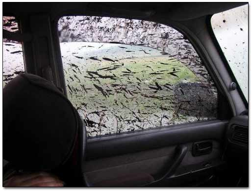 Dirt Covered the windows of Toyota Land Cruiser