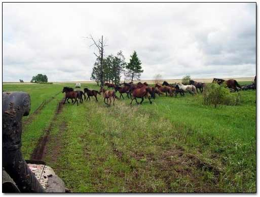 Wild Horses Crossing Our Path