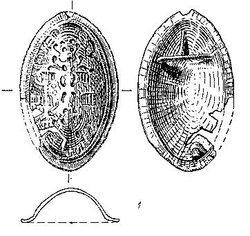 Drawing of Typical Tortoise Fibula