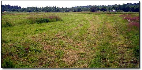 Metal Detecting Site - a Grass Field