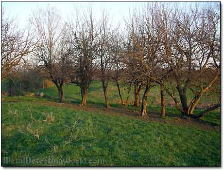 Old Apple Orchard