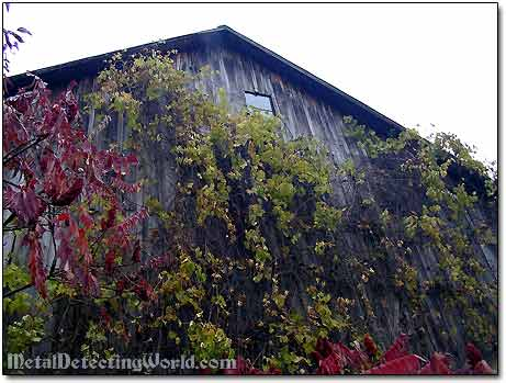 Barn Wall Vegetation