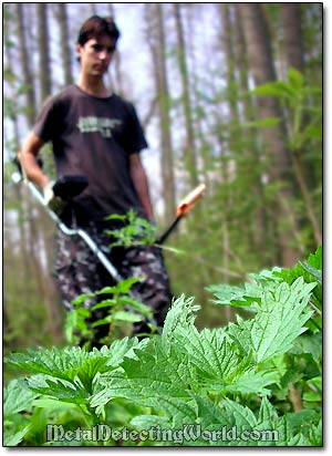 Metal Detecting around Stinging-Nettle Plants